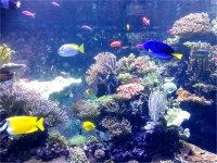 畅玩新加坡海底世界