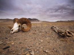 老男孩探险穿越藏北无人区——可可西里
