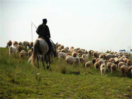 风吹草低见牛羊 望内蒙古草原生机勃勃