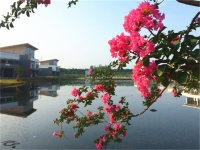 中华紫薇园环境清幽
