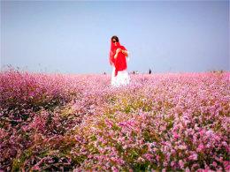 """大片粉红色的""""海洋"""" 与湖水交相辉映"""