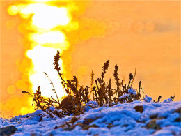 白色纯粹金色感人 雾凇岛日常朝朝暮暮