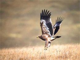 掠过村庄田野 一个展翅就能在天空飞翔