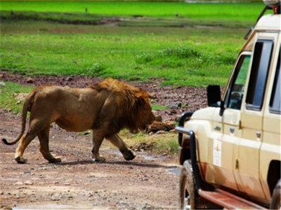 非洲六国狂野之旅 蓬勃生机和野性活力