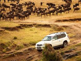 再次自驾肯尼亚 行摄夕阳下的车与动物