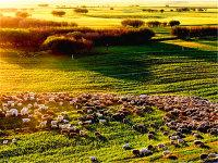 呼伦贝尔大草原自助游