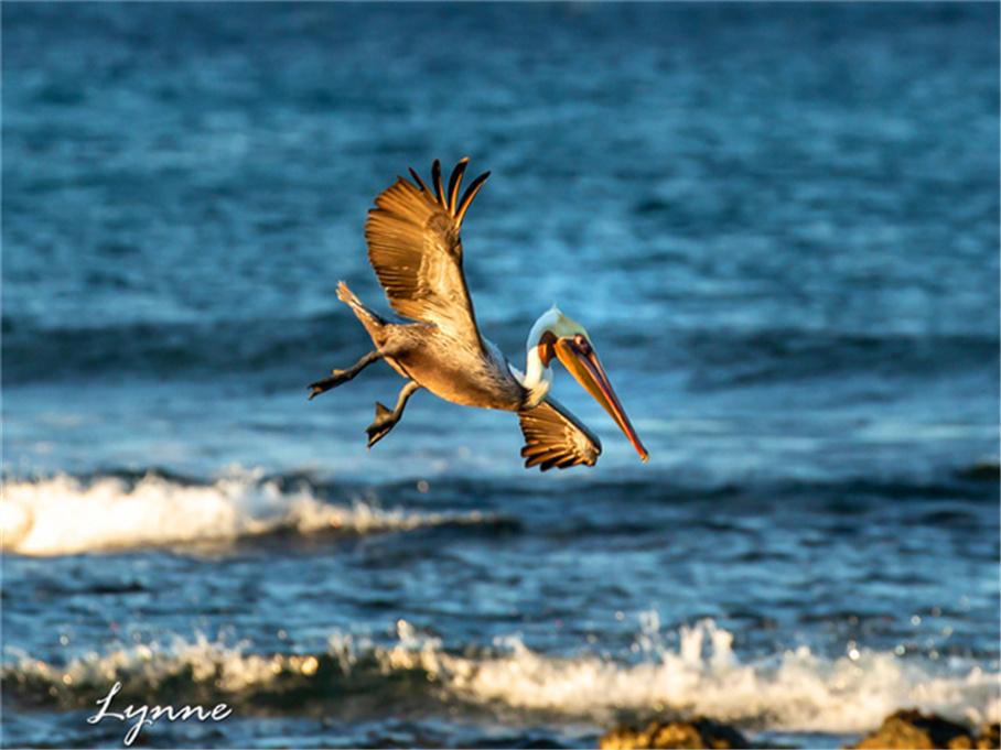 天然天堂寻找温暖 哥斯达黎加看天堂鸟