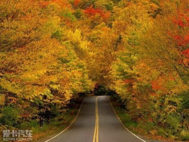 秋叶公路背景素材