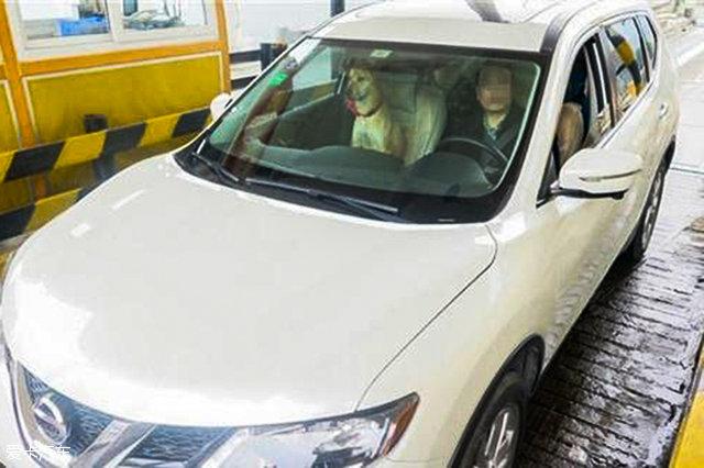 狗不能坐副驾