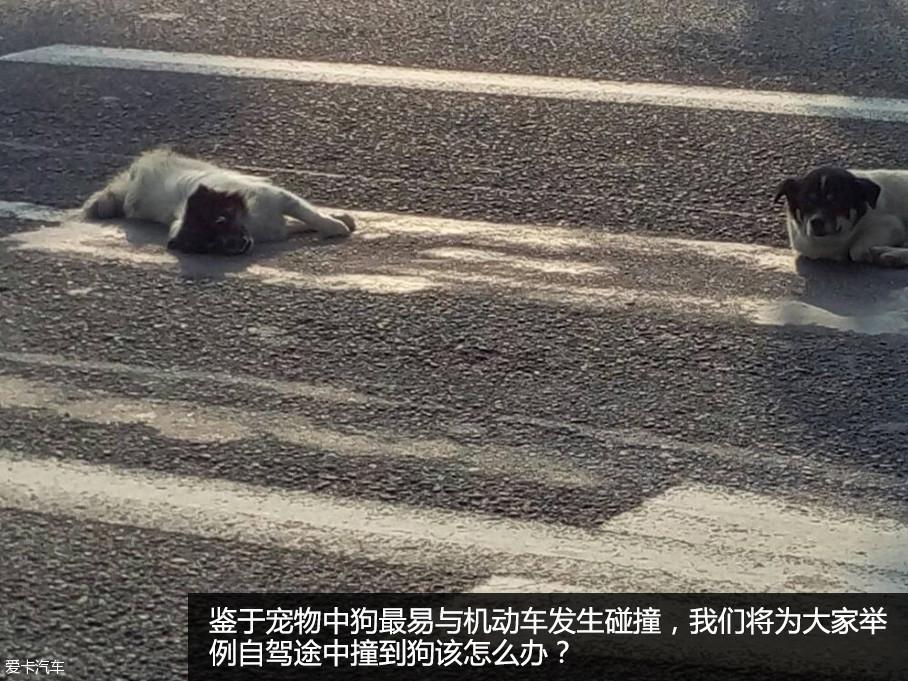 """发出了……""""这是赵忠祥老师《动物世界》中经典语录"""