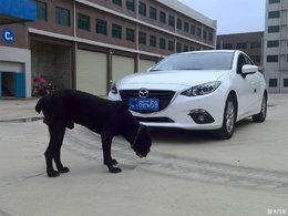 黑与白长情的陪伴 爱宠与马自达CX-4