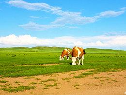 美梦终实现 情系内蒙古大草原