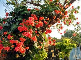 心灵平静 感多彩印度灿烂文化