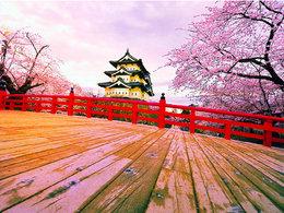 气候宜人 日本掠影赏最美樱花