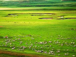 此生足够回忆 终到贡格尔草原