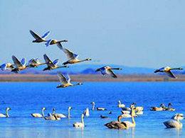 微波荡漾 欣赏达里湖美丽风光