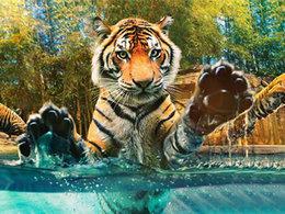 多姿多彩 畅玩富阳野生动物园