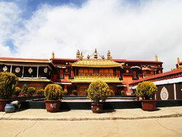 爱上野马 狂奔西藏寻找生命的真谛