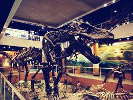 大开眼界 与恐龙化石亲密接触