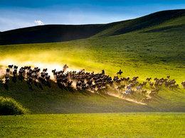 一路向北 赴一场和草原的约定