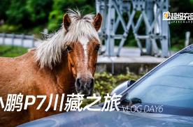 【Vlog】小鹏川藏之旅 DAY6,鲁朗有多美?
