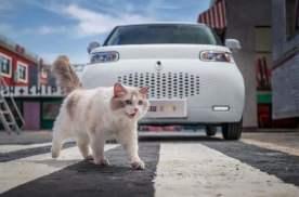 从大狗到白猫,长城车型车名越来越接地气,看完你会买吗