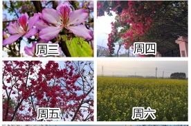 这就是广西人的赏花行程,不懂该羡慕还是该笑