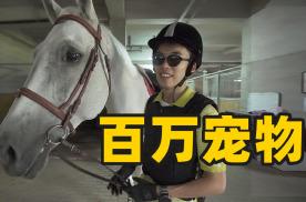 体验北京顶级马术俱乐部,解锁最绅士运动