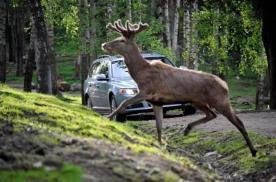 Gossip丨麋鹿测试中迷路的UNI-K,何处觅归途?