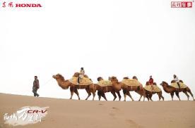 穿越戈壁沙漠,骑上骆驼寻找真的自我丨麻辣视频
