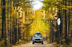 路上的内蒙EP06 金色森林中的驯鹿部落