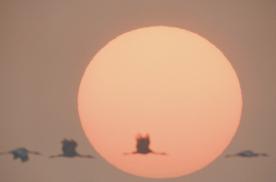 福特撼路者救援FJ 在鄱阳湖一天拍到中国四大顶级鹤
