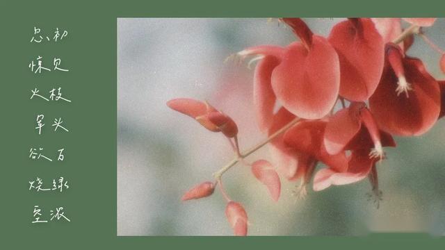"""""""烟火泉州""""——遇见""""顾家绅士""""东风本田新CR-V"""
