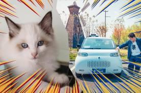 什么?卷叔这次不说车改撸猫了?撸了只神马猫?