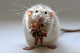 """二手车电商不该让消费者当""""小白鼠""""!"""