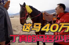 丁真小马珍珠的竞争对手竟价值40万,藏民也太有钱了