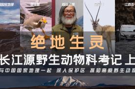 长江源 可可西里 野生动物守护之旅