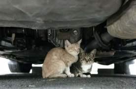 如何防止小猫钻进发动机舱?